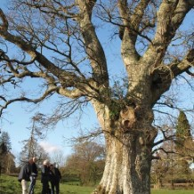 Cornwall Ancient Tree Forum news
