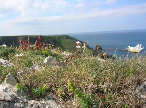 Lizard Vegetation on the coast