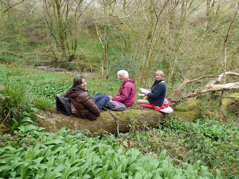Sheila Smith, Doreen Wilson and Margaret Gardener having lunch, in woods up from Bodmin Pill. Photo by Ian Bennallick.