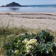 Botanical Cornwall Group summer 2019 field meetings