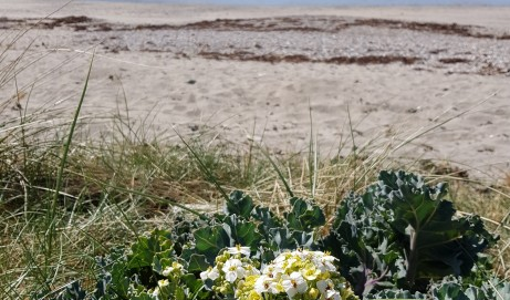 Botanical Cornwall Group summer 2019 field meetings